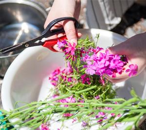 染料_菜園の花々